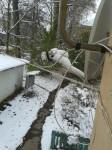 перший сніг