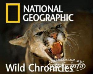Сегодня National Geographic channel было запрещено для показа в Украине