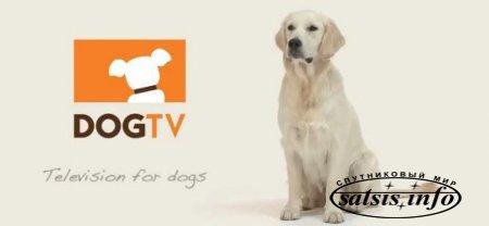 Канал для собак дебютирует в Европе