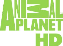 Animal Planet HD и Motowizja HD без копий на 13°E