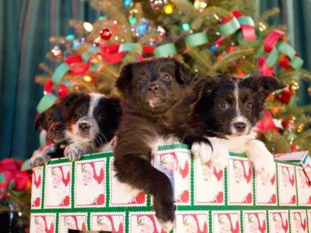 В Великобритании запускают рождественский телеканал